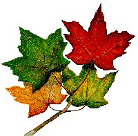 https://bccjanewsletters.files.wordpress.com/2014/09/7cb06-maple-leaves.jpg