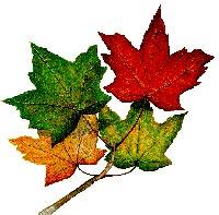 https://bccjanewsletters.files.wordpress.com/2014/09/7cb06-maple-leaves.jpg